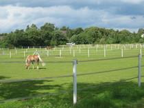 hier finden unsere Pferde Ruhe u